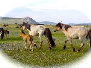 Trois chevaux